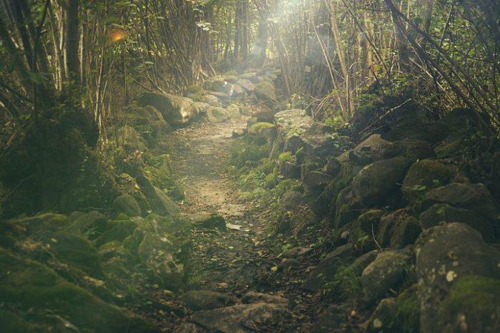Sentier de trail running dans les bois