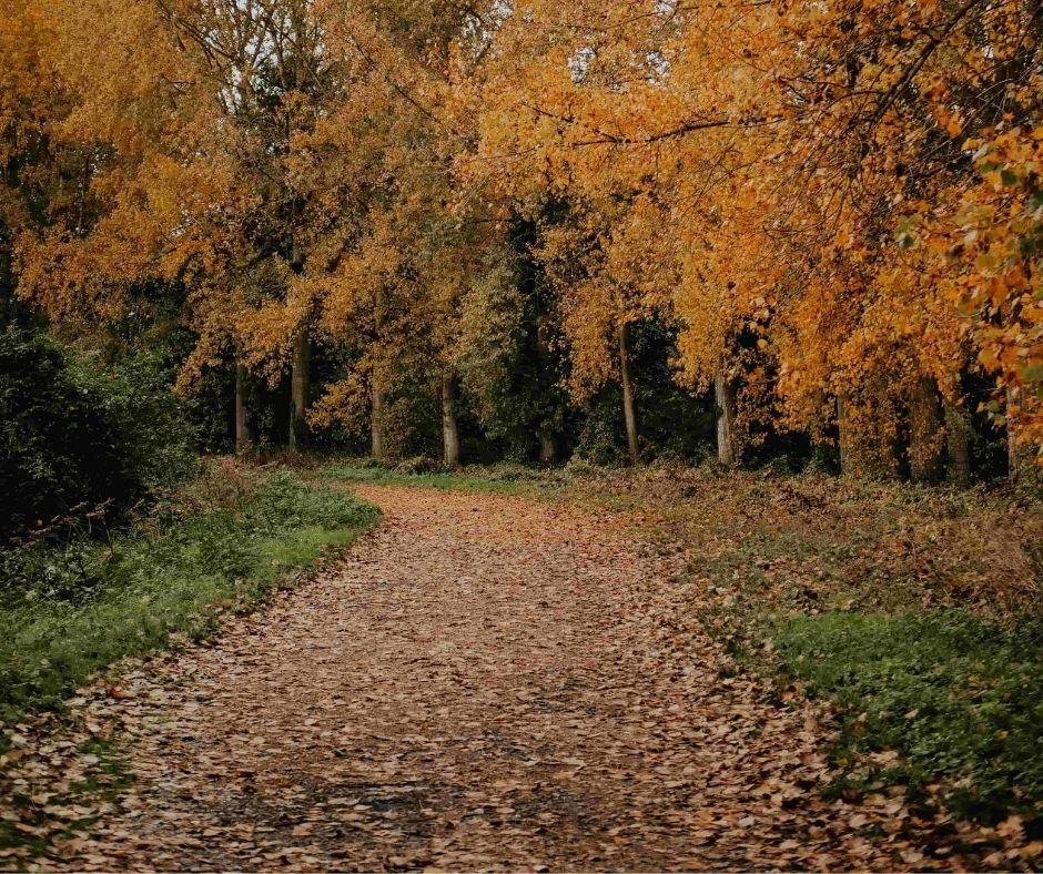 chemin course à pied automne